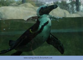 Peguin in water- STOCK by Rainny-Stock