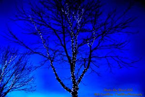 00-WinterSkyMarch2015-DSC01102-HDR-WP-Master by darkmoonphoto