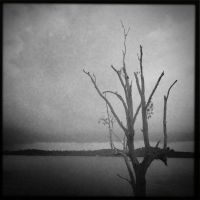 Lone Tree by Eonity