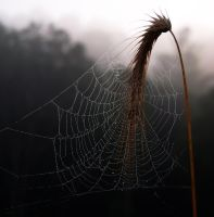 Morning Web Color by Logicalx