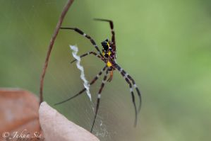 St. Andrews Spider by Jay-Sia