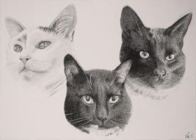Three cats by Maberg