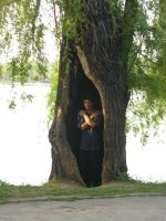 in the hollow tree boy stock by teenstock