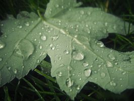 drops on a leaf by mysteriousfantasy