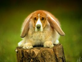 dog-rabbit by Tikeyphotoshop