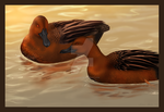 Cinnamon Teal by Misted-Dream