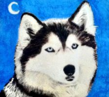 A Husky drawing by JoaoMoita182