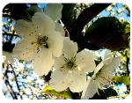Blossoms by SarahJPhotography