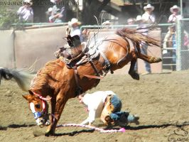Rowell Ranch Rodeo - 24 by Nyaorestock
