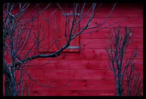 red november by salvaterra