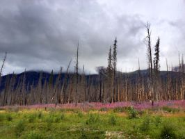 Kootenay Plains Forest Fire by godofodd