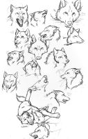 Wolf Head Practice by IgniteTheBlaze