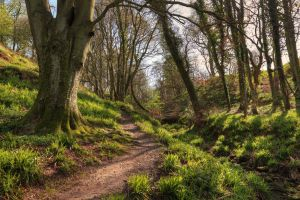 Northumberland Woods by scotto