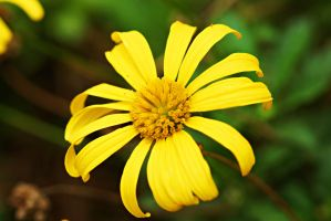 Yellow flower 5 by a6-k