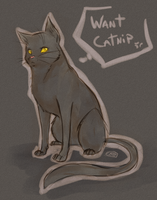 CATNIP! by Cote-Traumas