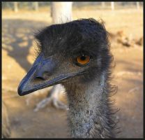 Ostrich with Bad Hairday by Jenvanw