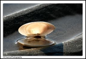 Shell by CharmingPhotography