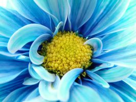 CLose Up flower by Spidermancrd
