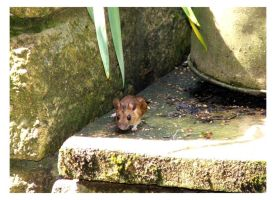 Mouse by crystalfalls