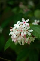 White and Pink by Pollito-is-Artzy