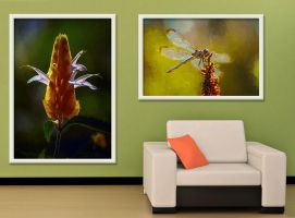 Nature Images (on wall) by eccoarts