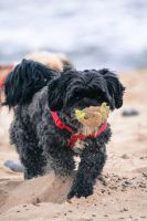 My dog as a sand scooper by Samuel-Benjamin