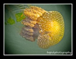 Jelly Fish by Bapuk