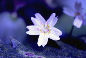 little beauty by narin300