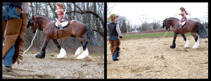 Breyer - Lunge Line Practice by The-Toy-Chest