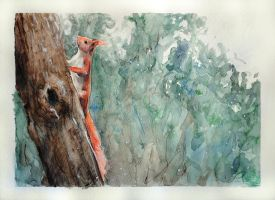 Squirrel on a tree by Evychan