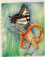 lily and buterfly by winstonscreator