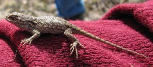 Lizard 1 -- Nov 2009 by pricecw-stock