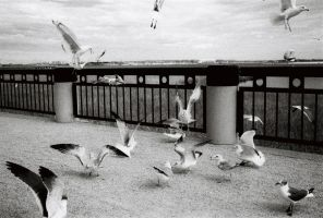 Attack of the Birds! by ExposurePersonality