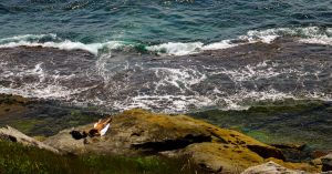 Coogee Sunbather by addr010
