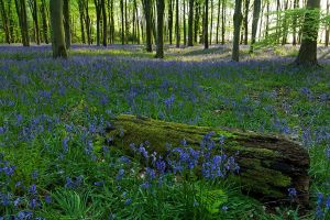 A Forest of Blue by JakeSpain