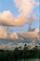 Reeds, Clouds and a Bay by Molot