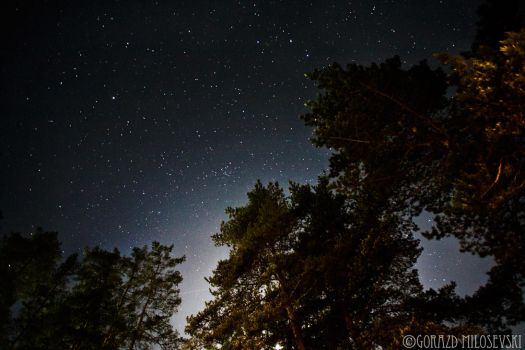 Starry Pines by Goksy
