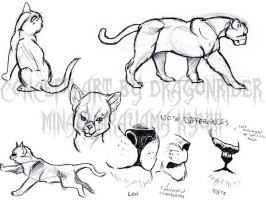 Animal Studies . Cats by Sorren-Chan