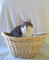Rema - In A Basket 01 by phantompanther