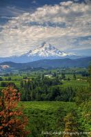 Mt Hood View by La-Vita-a-Bella