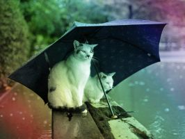 Cats and Rain (rainbow effect) by Usagichan-odango