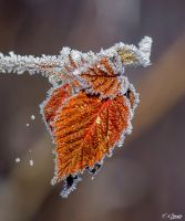 Frosty morning 9 by Nini1965