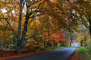 just a road by augenweide