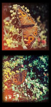 Butterfly by Shaun-Remo