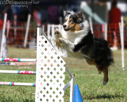 Hollywood Obedience Agility Trial 3 by Deliquesce-Flux