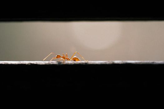 the ant by yellowminded