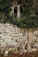 century old ivy roots 2 by Cyril-Helnwein