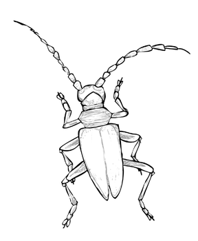 Capricorn Beetle by zelie