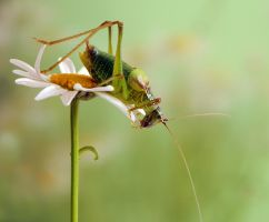 Grasshopper by dralik