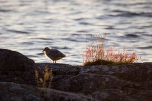 Little Seagull by SanctuaryWarrior